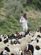Tharis in drought season (Credit: Fayyaz Naich)